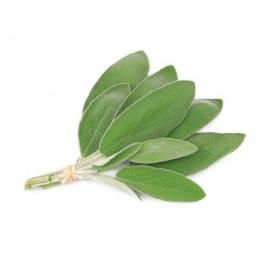 The Plant Sage